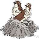 family Turnicidae - small Old World birds resembling but not related to true quail