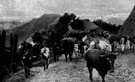 cattle trail - a trail over which cattle were driven to market