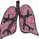 Respiratory Organ Definition Of Respiratory Organ By The Free