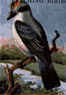 petchary - a kingbird that breeds in the southeastern United States and winters in tropical America